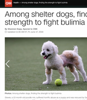 bulimia-shelter-dogs